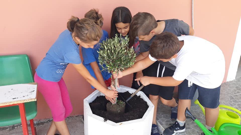 Afra pupils plant ΄olive tree of hope΄